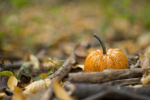Halloween-pompoen in een herfst natuur omgeving foto