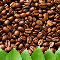 natuurlijke koffiebonen achtergrond met groene bladeren foto