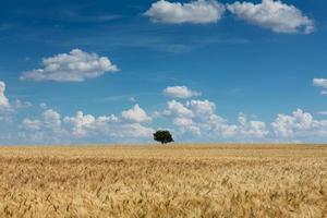 landbouw landschap foto