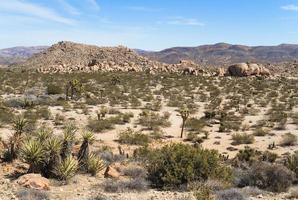 woestijn landschap foto