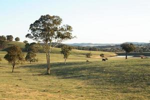 landelijk landschap foto
