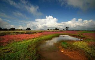 zalig veld, landschap foto