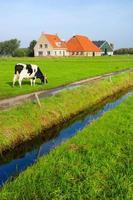 typisch nederlands landschap foto