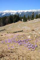 sping berglandschap foto