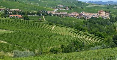 zomerlandschap in Langhe (Italië)