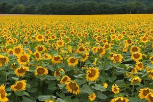 landschap van het platteland in japan foto