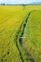 Vietnam platteland landschap, rijst veld foto