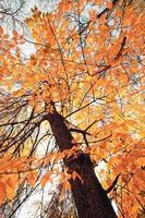 bladeren vallen