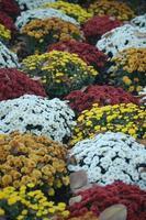herfst bloemen