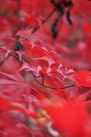 herfstkleuren foto