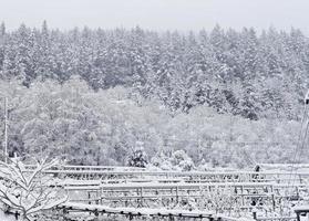 winter hekken foto
