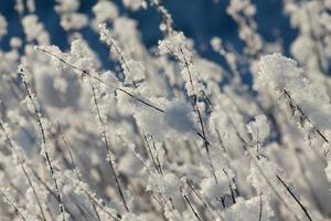 Russische winter foto