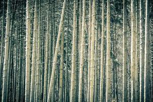 winter boomstammen foto