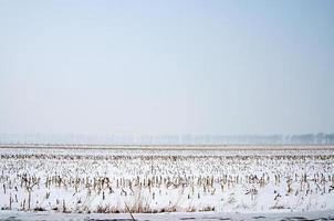 winter landbouwgrond foto