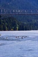 perfecte zeilkano's en kajaks op de schilderachtige rivierkloof van Columbia foto