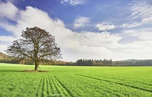 agrarisch landschap foto