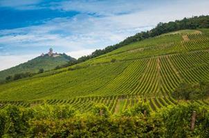 wijngaard in Duitsland foto