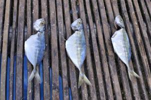 rij van zoute vis droog onder de zon foto