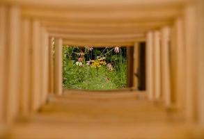 bloemen in frame gemaakt van rij stoelen foto