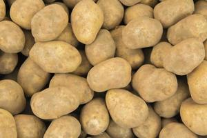 winter aardappelen foto