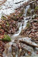 winter bos kreek