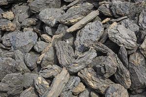 kolen voor de winter foto