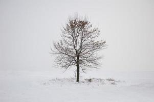 winter eenzame boom foto