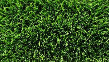 textuur groen gazon foto