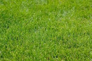 vers groen gras foto