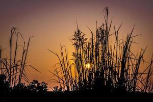 zonsondergang silhouet foto