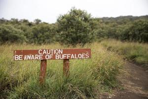 let op het teken van buffels foto