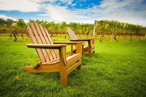 stoelen in de wijngaard foto