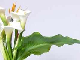 witte calla lelies