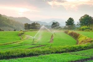 het padieveld van het landschapsterras in chiangmai Thailand foto