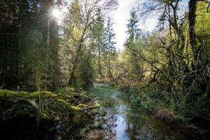wilde Beierse bos in Berchtesgaden Beieren foto