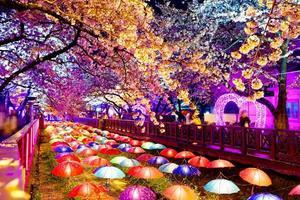 mooie sakura bloemen in busan, zuid-korea foto