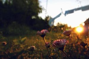 wilde bloemen bij zonsondergang foto