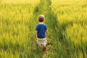 kleine jongen die door gerstgebied loopt foto