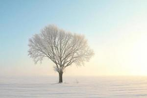 enkele frosted boom in de sneeuw bij zonsopgang