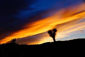 Joshua Tree Park zonsondergang foto