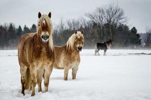 cheval dans la brume / paard in de mist foto