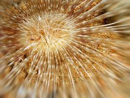 zee bloem foto