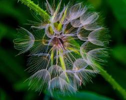 skelaton bloem foto