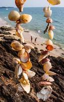 schelpen strand foto