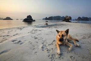 rustig strand foto