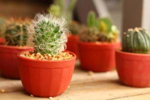 sluit omhoog cactus