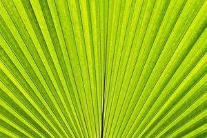 blad close-up