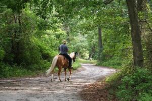 paardrijden door het bos foto