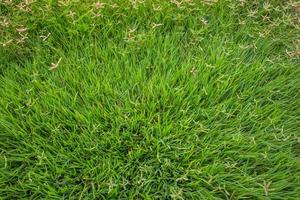 gras textuur close-up foto
