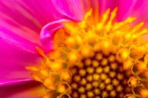 bloem in close-up foto